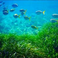 PASAPORTE A LA PLAYA. Snorkel en 3 Continentes y 4 países.